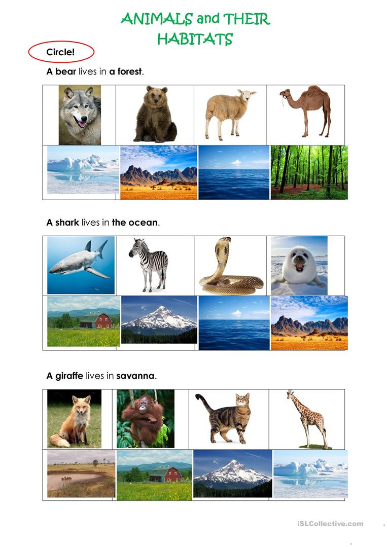 ANIMALS AND THEIR HABITATS English ESL Worksheets for
