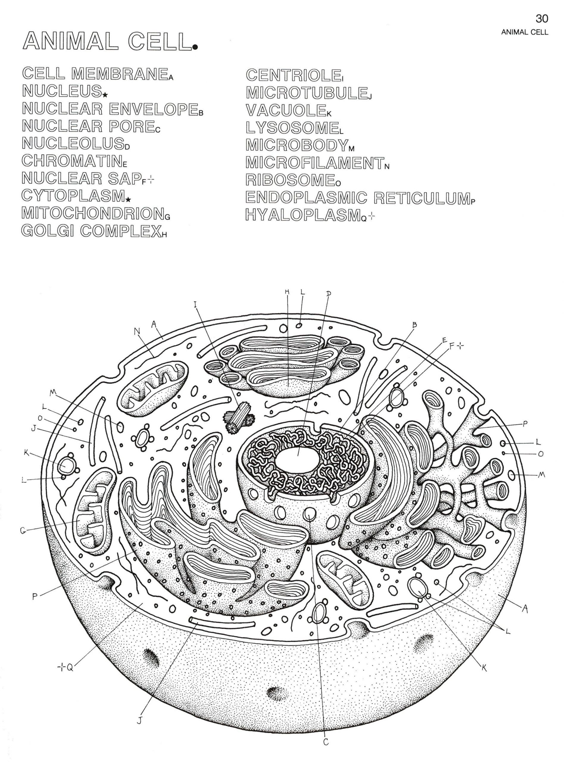 Awesome Cell organelle Coloring Sheets in 2020