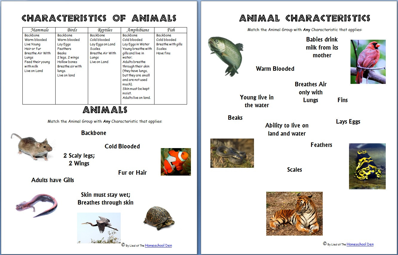 Free Animal Classification Worksheets