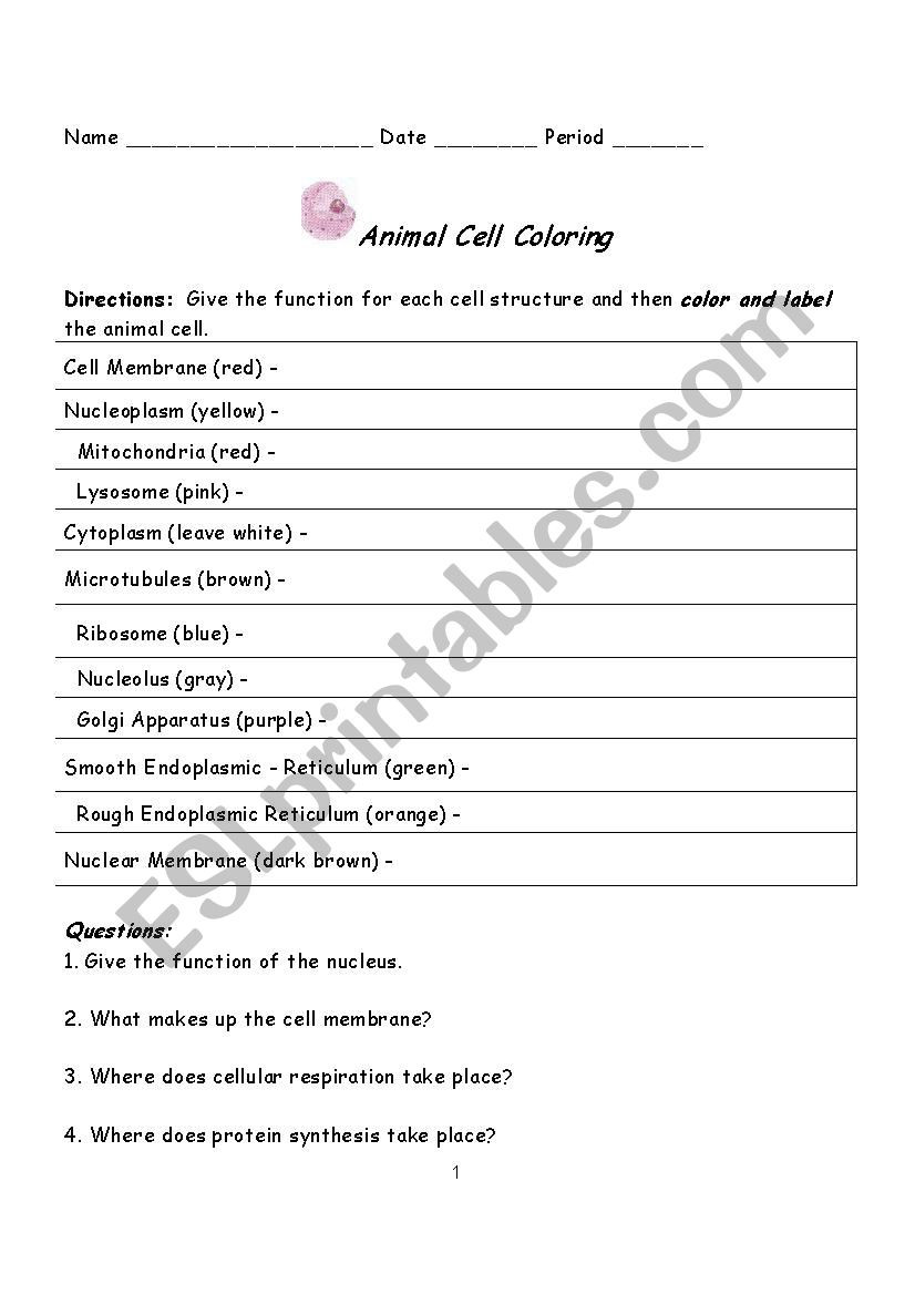 Protein Synthesis Coloring Worksheet