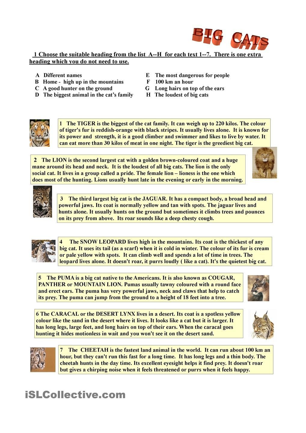 An American Tail Worksheet Answers