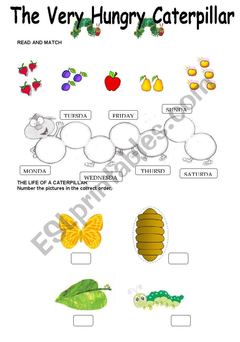 Very Hungry Caterpillar Worksheets
